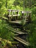 Swamp Trail. A wood board trail through the swamp Stock Photos