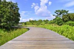 Swamp Trail Royalty Free Stock Photos