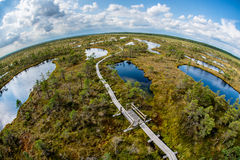 Swamp trail. Cenas tīrelis swamp trail in Latvia stock photography