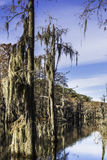 Swamp Tree Moss. Swamp water and trees covered in moss with reflections in the water Royalty Free Stock Images