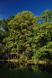Swamp tree 2 Royalty Free Stock Photo