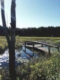 Swamp. Tree water Royalty Free Stock Image