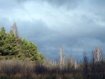 Swamp trees and beautiful cloudy sky, Lithuania Royalty Free Stock Image