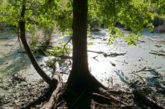 Swamp and Trees Royalty Free Stock Photography