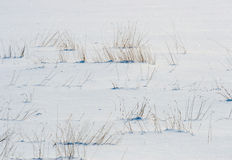 Swamp under snow Stock Image