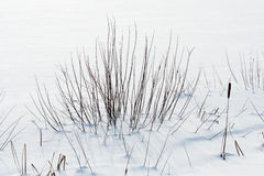 Swamp under snow Royalty Free Stock Images