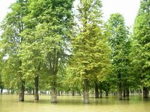 Swamp in the United States Royalty Free Stock Photo