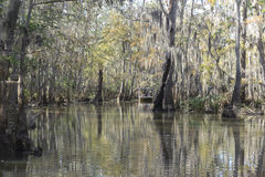 Swamp vegetation. A photograph of a heavily forest swamp Royalty Free Stock Photos