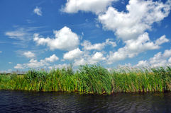 Swamp vegetation in the Danube Delta Royalty Free Stock Images