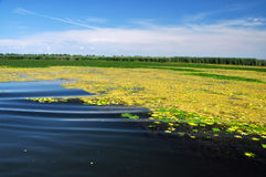 Swamp vegetation in the Danube Delta Stock Photography