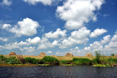 Swamp vegetation in the Danube Delta Royalty Free Stock Photography