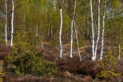 Swamp vegetation in forest Stock Photo
