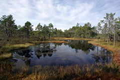 Swamp Viru in Estonia.The nature of Estonia. royalty free stock photos