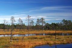 Swamp Viru in Estonia.The nature of Estonia. stock images