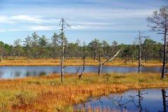 Swamp Viru  in Estonia.The nature of Estonia. Stock Photography