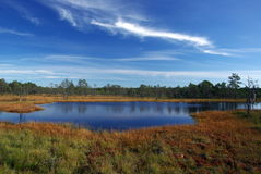 Swamp Viru  in Estonia.The nature of Estonia. Royalty Free Stock Photos