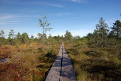 Swamp Viru  in Estonia.The nature of Estonia. Stock Photo