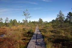 Swamp Viru  in Estonia.The nature of Estonia. Stock Photo