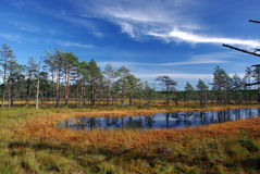 Swamp Viru  in Estonia.The nature of Estonia. Royalty Free Stock Image