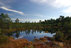 Swamp Viru  in Estonia.The nature of Estonia. Stock Images