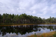 Swamp Viru  in Estonia.The nature of Estonia. Royalty Free Stock Images