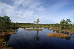 Swamp Viru  in Estonia.The nature of Estonia. Stock Image