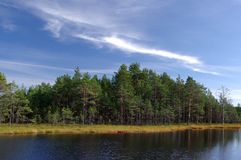 Swamp Viru  in Estonia.The nature of Estonia. Stock Image