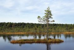 Swamp Viru  in Estonia.The nature of Estonia. Stock Photography