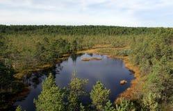 Swamp Viru  in Estonia.The nature of Estonia. Royalty Free Stock Image