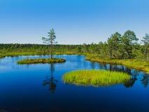 Swamp Viru raba in Estonia. Island with pine tree on Viru raba bog in Estonia. Lahemaa National Park Royalty Free Stock Photography