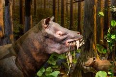 Swamp Wader Eating. Ancient Swamp Wader eating plants Stock Photos
