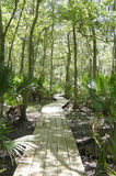 Swamp Walk. A boardwalk hiking trail in the Jean lafite National Park swamp area stock images