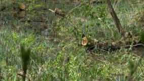 Swamp Water Plants. Swamp water vegetation waving in the wind stock video footage