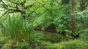 Swamp Stock Photography