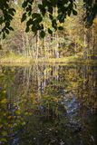 Swamp in wild taiga in autumn stock image