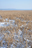Swamp in winter Stock Image