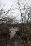 Swamp before winter. Russia stock image