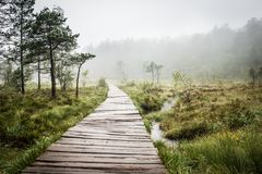 Swamp wooden path walkway to Trolltunga Norway Stock Photo