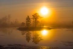 Swamp Yelnya, Belarus royalty free stock photography