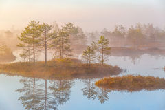 Swamp Yelnya, Belarus royalty free stock image