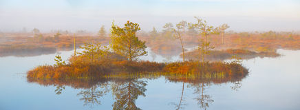 Swamp Yelnya, Belarus Royalty Free Stock Images