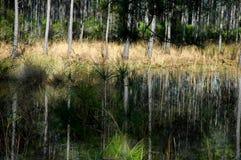Swampgrass door meer Stock Fotografie