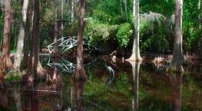 Swampland在南卡罗来纳 库存照片