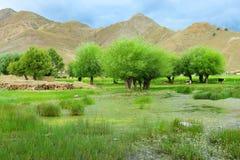 swampland西藏 免版税图库摄影