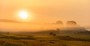 swampland Foto de Stock