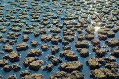 swampland 免版税库存照片