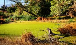 swampland Стоковая Фотография