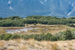 Swampland in Arthur's Pass National Park Stock Photography