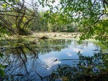swampland bij de delta van Donau Royalty-vrije Stock Afbeelding