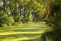 Swampland bij rivier` s delta Royalty-vrije Stock Foto